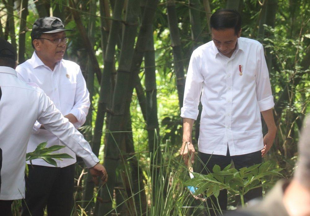 Presiden Jokowi Tanam Porang dan Akar Wangi di Jatisrono